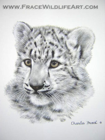 Snow Leopard Cub (Mini)